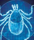 THE UNDERDIAGNOSIS OF NEUROPSYCHIATRIC LYME DISEASE IN CHILDREN AND ADULTS