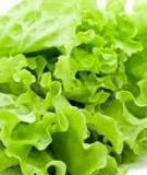 Những tác dụng của rau diếp xoăn