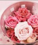 Tác dụng chữa bách bệnh từ hoa hồng