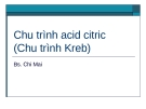 Chu trình acid citric