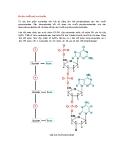 Cấu tạo chuỗi poly nucleotide