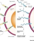 THE RAPID EVOLUTION OF REPRODUCTIVE PROTEINS