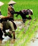 Phát triển sản xuất: Bệ phóng của Việt Nam