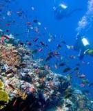 Hệ sinh thái biển Việt Nam suy thoái nghiêm trọng