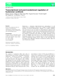 Báo cáo khoa học: Transcriptional and post-translational regulation of hyaluronan synthesi