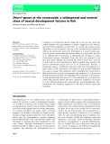Báo cáo khoa học:  Dmrt1 genes at the crossroads: a widespread and central class of sexual development factors in fish