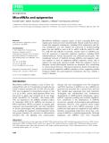 Báo cáo khoa học:  MicroRNAs and epigenetics