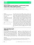 Báo cáo khoa học: Serine-arginine protein kinases: a small protein kinase family with a large cellular presence