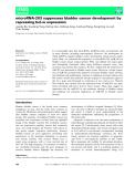 Báo cáo khoa học: microRNA-203 suppresses bladder cancer development by repressing bcl-w expression