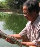 Kỹ thuật nuôi cá lóc bông trong ao đất