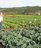 Đánh giá nông thôn có sự tham gia