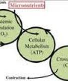 Adjunctive micronutrient supplementation for pulmonary tuberculosis