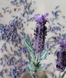 Tinh dầu tự chế chống côn trùng cắn giao mùa