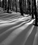 Nhiếp ảnh – Môn nghệ thuật của ánh sáng
