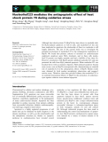 Báo cáo khoa học: Nucleolin/C23 mediates the antiapoptotic effect of heat shock protein 70 during oxidative stress
