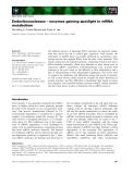 Báo cáo khoa học: Endoribonucleases – enzymes gaining spotlight in mRNA metabolism