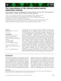 Báo cáo khoa học: The transcriptome of the colonial marine hydroid Hydractinia echinata