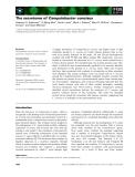 Báo cáo khoa học: The secretome of Campylobacter concisus
