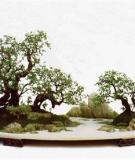 Những trường phái bonsai ấn tượng nhất thế giới