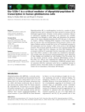 Báo cáo khoa học: Ets-1/ Elk-1 is a critical mediator of dipeptidyl-peptidase III transcription in human glioblastoma cells