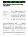 Báo cáo khoa học:  Survival mechanisms of pathogenic Mycobacterium tuberculosis H37Rv