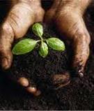 Trắc nghiệm về Sự phát sinh và phát triển của sự sống