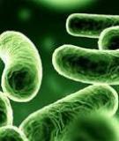 Có nên dùng kháng sinh khi bị rối loạn tiêu hóa?