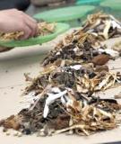 Ngộ độc thuốc nam: Hết chì lại đến asen