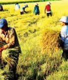 Bài viết bổ trợ cho Địa lí ngành nông nghiệp , địa lí kinh tế, địa lí vùng ĐBS Cửu Long, Địa lí Du lịch.