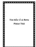 Tìm hiểu về cá Betta Plakat Thái