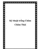 Kỹ thuật trồng Chôm Chôm Thái