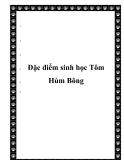 Đặc điểm sinh học Tôm Hùm Bông