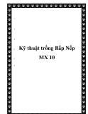 Kỹ thuật trồng Bắp Nếp MX 10