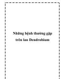 Những bệnh thường gặp trên lan Dendrobium