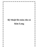 Kỹ thuật lên màu cho cá Kim Long