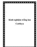 Kinh nghiệm trồng lan Cattleya