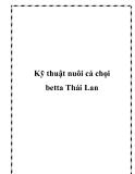 Kỹ thuật nuôi cá chọi betta Thái Lan
