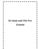 Kỹ thuật nuôi Thỏ New Zealand