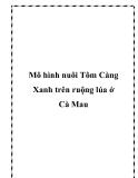 Mô hình nuôi Tôm Càng Xanh trên ruộng lúa ở Cà Mau