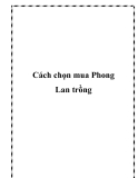Cách chọn mua Phong Lan trồng