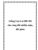 Giống Lúa Lai HR 182 cho vùng đất nhiễm mặn, đất phèn