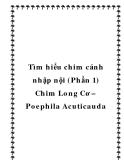 Tìm hiểu chim cảnh nhập nội (Phần 1) Chim Long Cơ – Poephila Acuticauda
