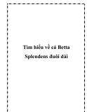 Tìm hiểu cá Betta Splendens đuôi dài