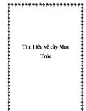 Tìm hiểu về cây Mao Trúc