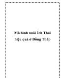 Mô hình nuôi ếch Thái hiệu quả ở Đồng Tháp