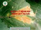 Quản lý bệnh hại trên cây họ cải  ( Nguyễn Văn Thiệu)