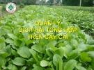 Quản lý dịch hại tổng hợp trên cây cải  ( Nguyễn Văn Thiệu)