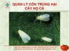 Quản lý côn trùng cây họ cà  ( Nguyễn Văn Thiệu)