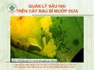 Quản lý sâu hại trên cây bầu mướp dưa  ( Nguyễn Văn Thiệu)