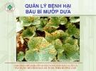Quản lý bệnh hại trên cây bầu mướp dưa  ( Nguyễn Văn Thiệu)